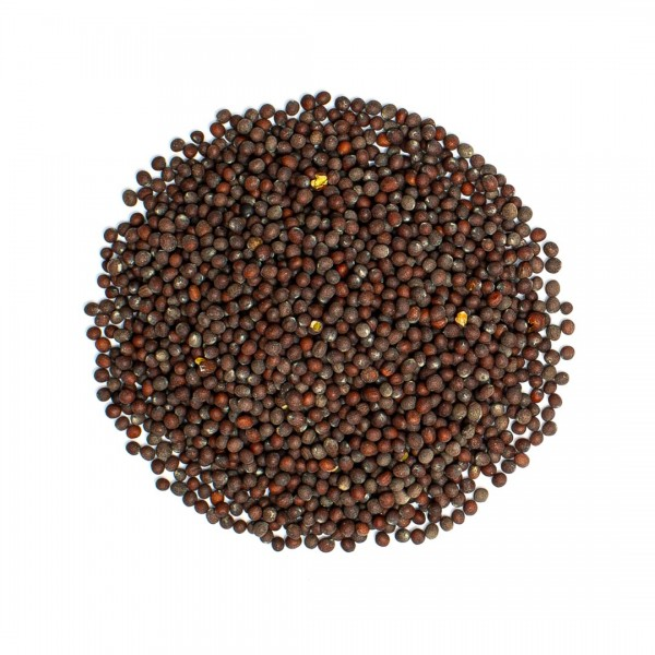 Senfkörner, schwarz